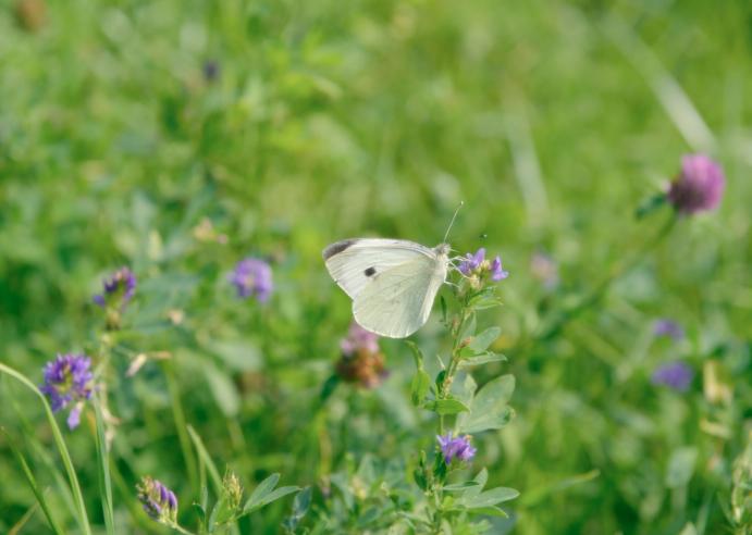 imatge d'una papallona