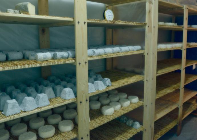 Curant els formatges